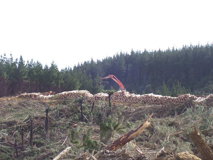 Forestry and land investments in New Zealand